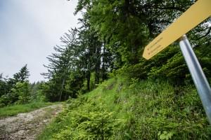 Wanderung: Steinbach - Ybbstalerhütte