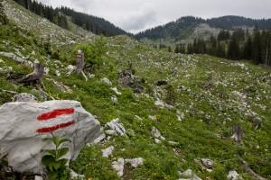 Wanderung: Steinbach - Ybbstalerhütte | Auf der Alm