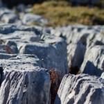 Zerklüftete Felsen zwischen Ybbstalerhütte und Dürrenstein
