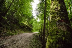 Im Almwald