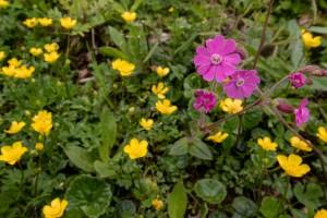 Flora rund um die Ybbstalerhütte